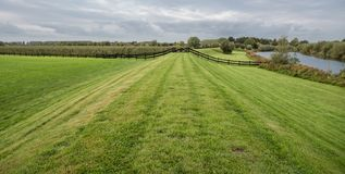 Grass field with wooden fence royalty free stock photo