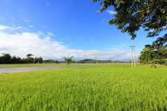 Grass field, fishpond with electricity pole near a village at Dak Lak Vietnam. A very beautiful place with fish ponds, grass field (and electricity pole near the Royalty Free Stock Image