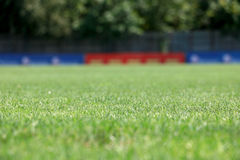 Grass field in focus Royalty Free Stock Images