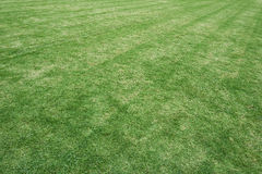 Grass field in the football stadium. Use as texture and background Stock Photography