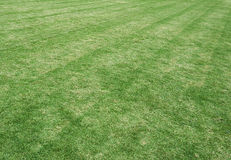 Grass field in the football stadium. Use as texture and background Royalty Free Stock Photography