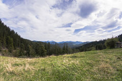 Grass field with forest and mountain. In the background Royalty Free Stock Photography