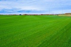 Grass. Field of  green grass on sod farm Stock Photo