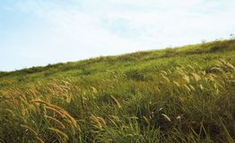 Grass field on the hill. With sky background Stock Images
