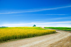 Grass field landscape with blue sky Royalty Free Stock Image