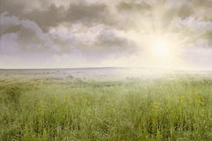 Grass field landscape at sunrise stock photo