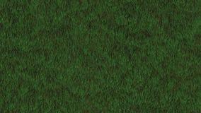 Grass Field Loop stock footage
