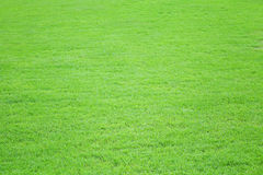 Grass field meadow background Stock Image