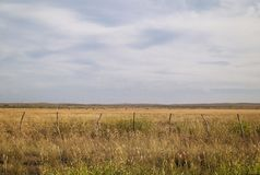 Grass Field in the Midwest. Of the USA royalty free stock photography