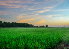 Grass field. In the morning Royalty Free Stock Photography