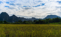 Grass field with mountain and sky Stock Images