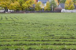 Grass field mowed Royalty Free Stock Image