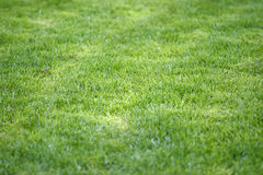 Grass field new 2 Royalty Free Stock Images