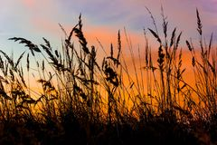 Grass on field in orange sunset. Czech republic Royalty Free Stock Images