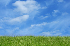 Grass field over blue sky Stock Photos