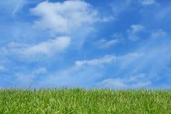 Grass field over blue sky. Green grass field over blue sky background Stock Photos