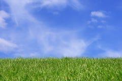 Grass field over blue sky Stock Photos