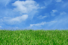 Grass field over blue sky. Green grass field over blue sky background Royalty Free Stock Image