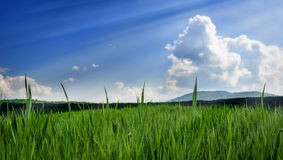 Grass field over blue sky Royalty Free Stock Photography