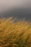 Grass field in overcast day Stock Image