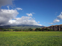Grass field in a Park in Kaanapali on Maui, Hawaii royalty free stock image
