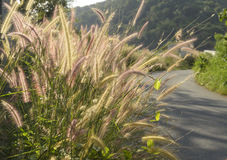 Grass field beside road Royalty Free Stock Photography