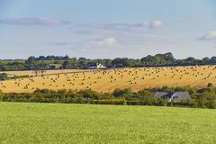 Grass field and round straw bales in harvested field on a farm Stock Photos