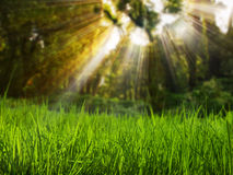 Grass field and sand Royalty Free Stock Photo