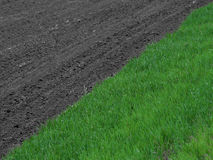 Grass field - selective colour Stock Photo