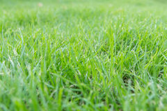The grass field Stock Image