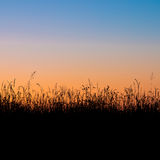 Grass field silhouette Royalty Free Stock Image