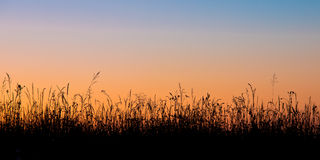Grass field silhouette Royalty Free Stock Images