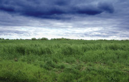 Grass field and sky. Field of grass with stormy skies royalty free stock image