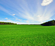 Grass field and sky Royalty Free Stock Photos