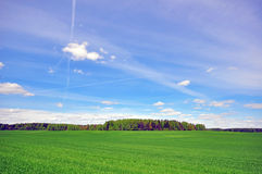 Grass field and sky Stock Image