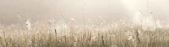 Grass field with spider webs Royalty Free Stock Image
