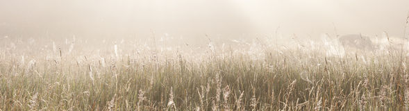 Grass field with spider webs. Panorama of a grass or hay field with spider webs on a misty morning at sunrise Royalty Free Stock Images