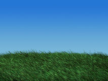 Grass field in spring. Illustration of a grass field Stock Images