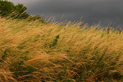 Grass field before storm Royalty Free Stock Photography