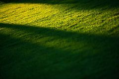 Grass Field and the Sunlight Royalty Free Stock Photos