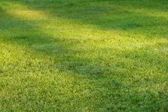 Grass field with sunlight spots Stock Photo