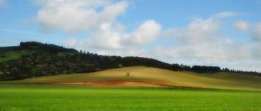 Grass field Royalty Free Stock Photo