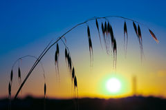 Grass field at sunset Stock Photography