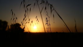 Grass in a field stock video footage