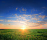 Grass field sunset stock photography