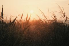 Grass Field during Sunset Royalty Free Stock Photos