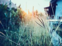 Grass field during sunset. Nature background Royalty Free Stock Images