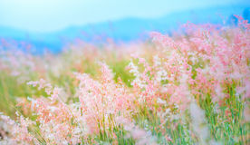 Grass field Stock Images