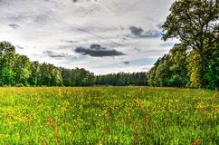 Green field near Malmedy. Grass field, surrounded by woodland, with various kinds of yellow and red flowers Stock Photos