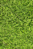 Grass field texture Royalty Free Stock Photos